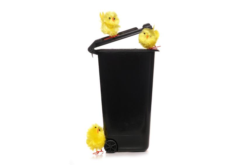 Easter Rubbish advice
