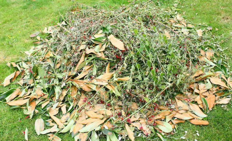 garden waste clearance spring