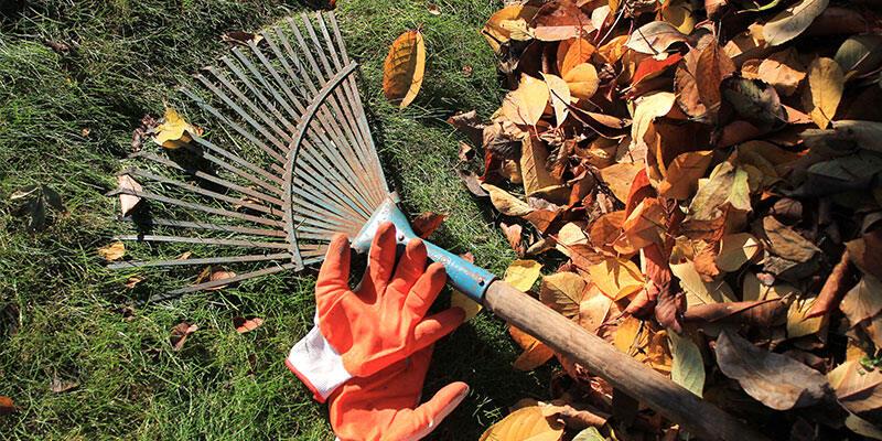Gardening clearance