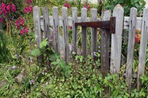 birmingham untidy garden