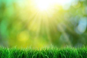 green grass waste Birmingham